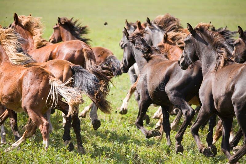 unga flockhästar arkivbild