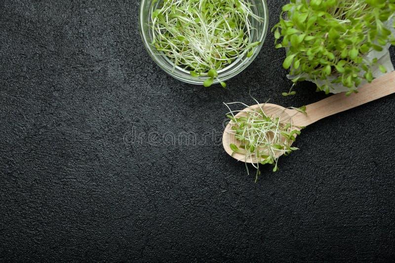 Unga gröna växter, plantor, groddar för mat Tomt avst?nd f?r text royaltyfri fotografi