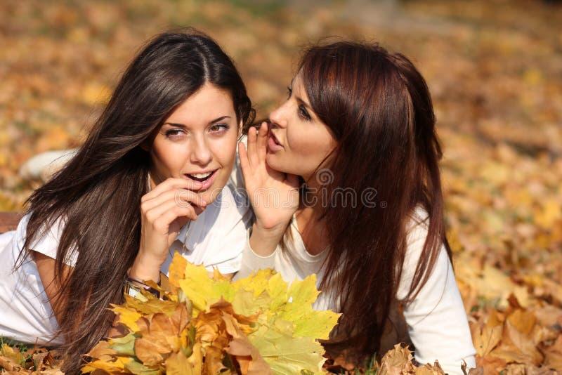 unga härliga kvinnor royaltyfria bilder