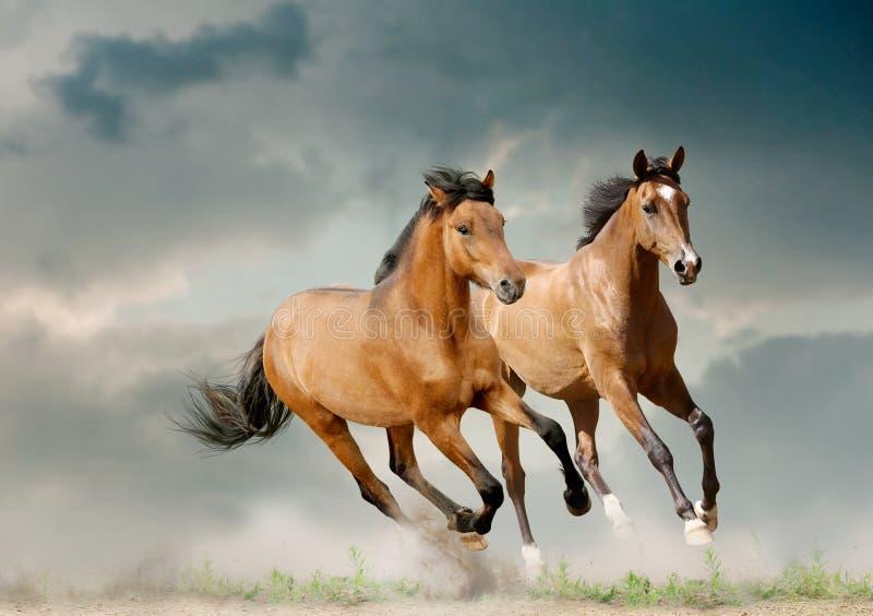 Unga hästar arkivfoto