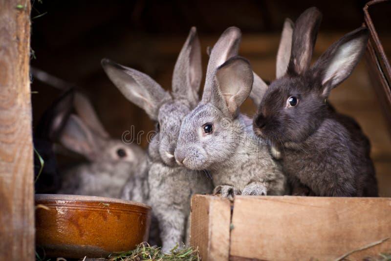 Unga kaniner POP ut ur en hutch fotografering för bildbyråer
