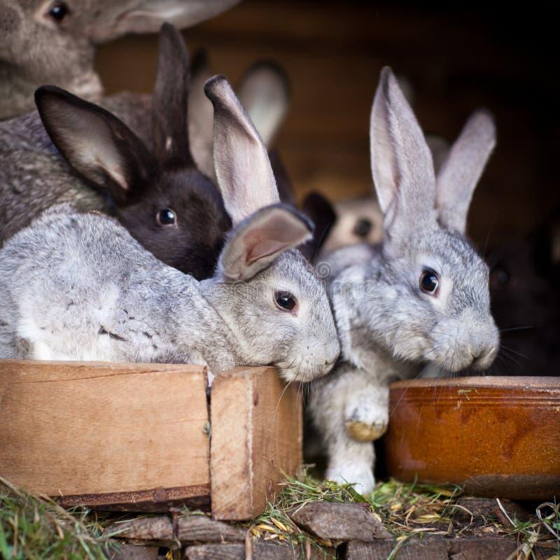 Unga kaniner POP ut ur en hutch royaltyfri fotografi