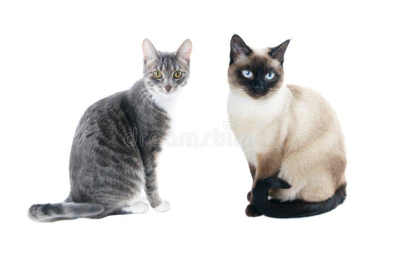 2 unga katter royaltyfria bilder