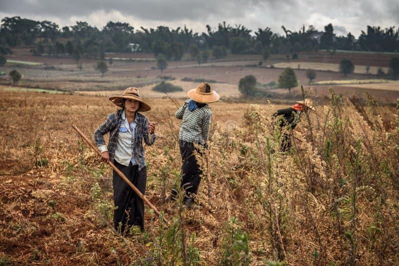Unga kvinnliga bönder som arbetar i ett fält royaltyfria bilder