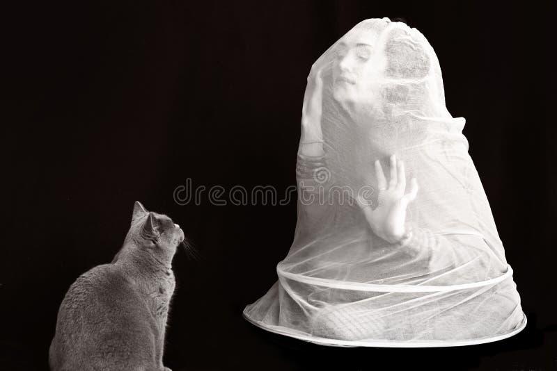 Unga kvinnor i ett vitt ingrepp och en brittisk katt arkivbilder
