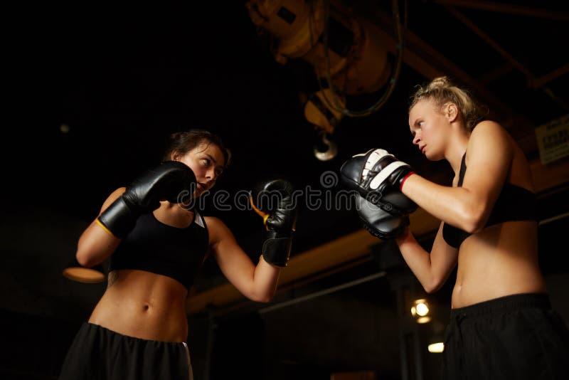 Unga kvinnor som boxas låg vinkel arkivfoton