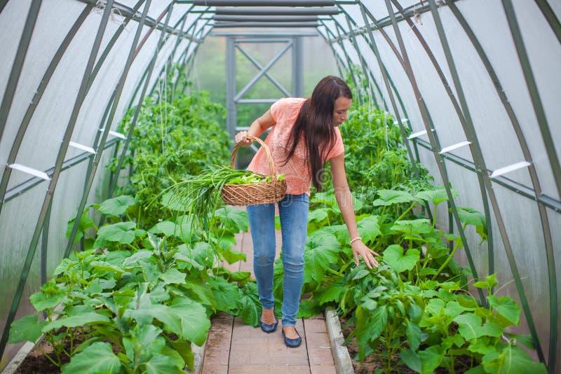 Unga lyckliga kvinnaskördar i växthuset royaltyfri foto