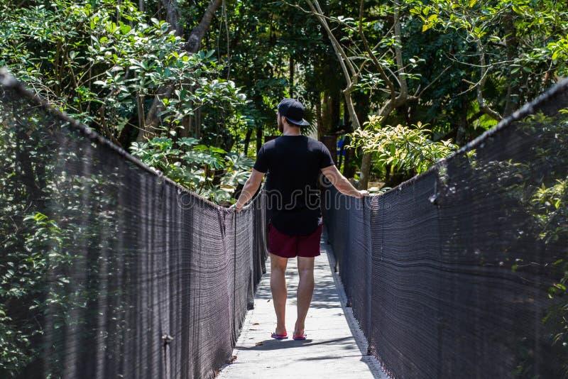 Unga män som reser i en tropisk djungel på en sommardag på en träbro fotografering för bildbyråer