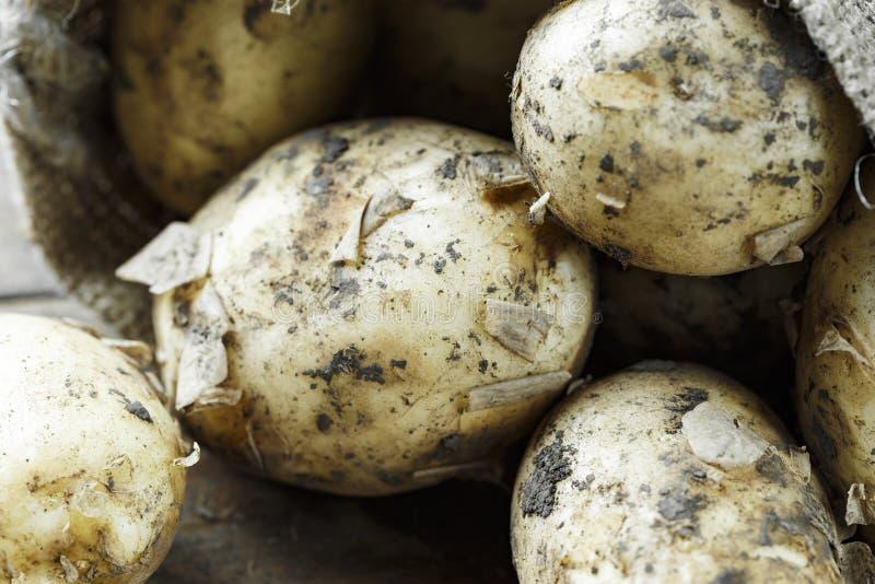 Unga potatisar på ett bräde royaltyfri foto
