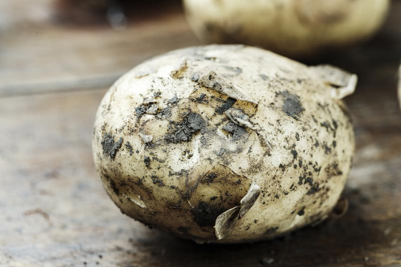 Unga potatisar på ett bräde arkivbild