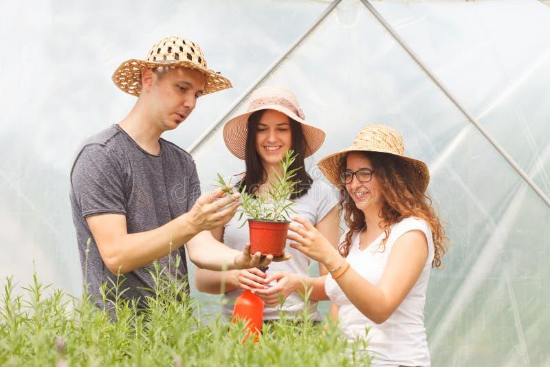 Unga stiliga bönder, en man och två kvinnor som kontrollerar grönsakväxter i ett växthus arkivbild