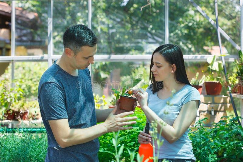 Unga stiliga bönder som arbetar i ett växthus arkivfoton