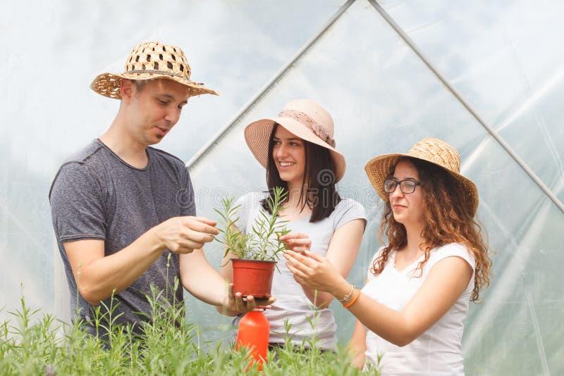 Unga stiliga bönder som kontrollerar grönsakväxter i ett växthus arkivbild