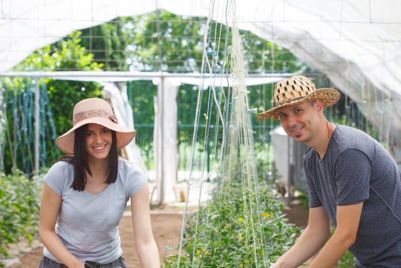 Unga stiliga bönder som tillsammans arbetar i ett växthus royaltyfri bild