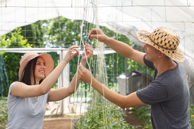Unga stiliga bönder som tillsammans arbetar i ett växthus arkivbilder