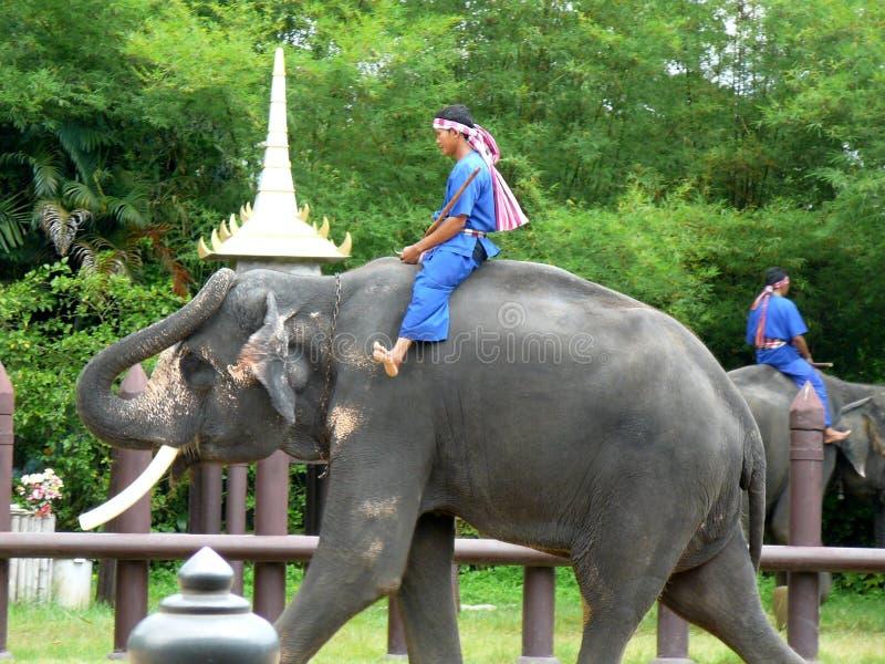 Unga thailändska män som rider elefanter på djuret, parkerar arkivfoton