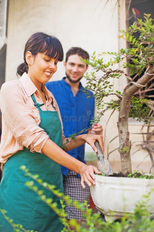 Unga trädgårdsmästare med bonsai fotografering för bildbyråer