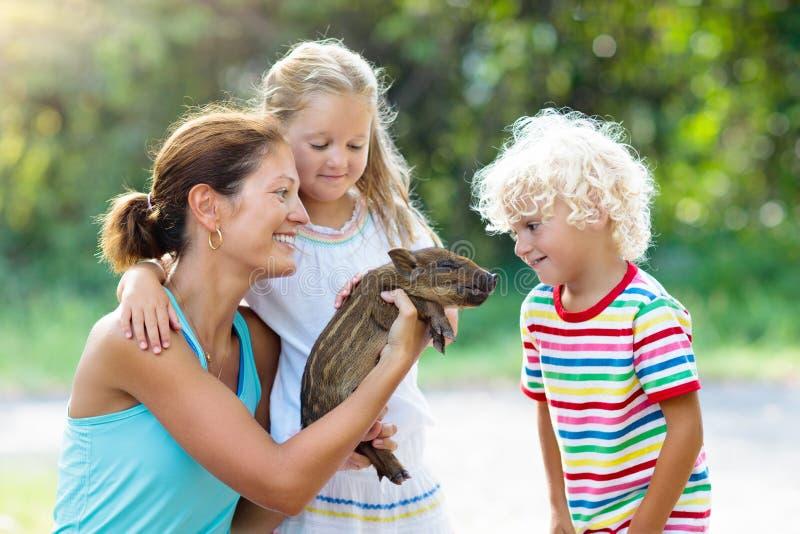 Ungar med behandla som ett barn svindjuret Barn på lantgården eller zoo royaltyfri fotografi