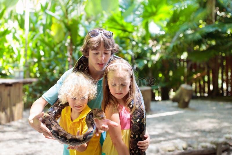 Ungar rymmer pytonormormen på zoo Barn och reptil arkivbilder