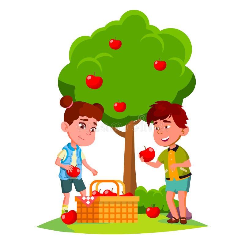 Ungar skördar äpplen i korg nära vektor för det Apple trädet isolerad knapphandillustration skjuta s-startkvinnan stock illustrationer