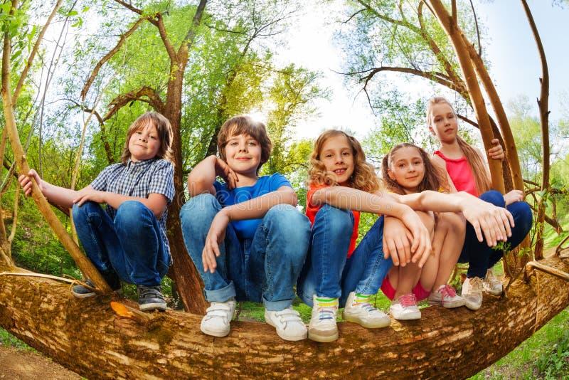 Ungar som sitter på stammen av det stupade trädet i skogen arkivbild