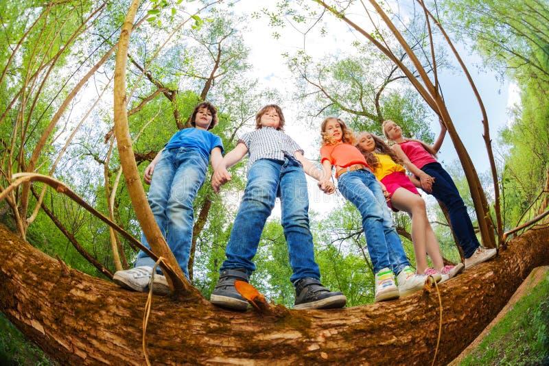 Ungar som tillsammans står på stammen av det stupade trädet arkivfoto