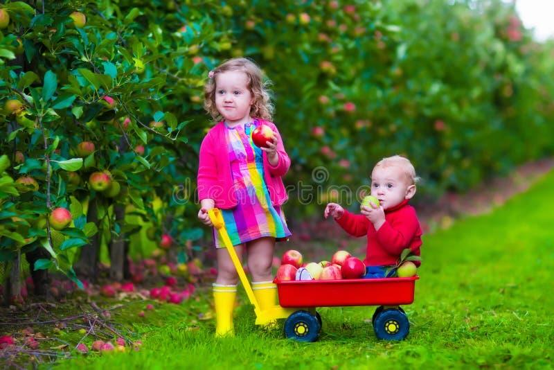 Ungar som väljer äpplet på en lantgård arkivbild