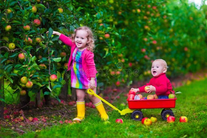 Ungar som väljer äpplet på en lantgård royaltyfria bilder