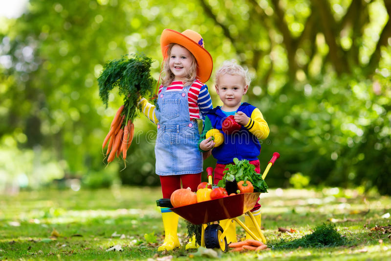 Ungar som väljer grönsaker på organisk lantgård fotografering för bildbyråer