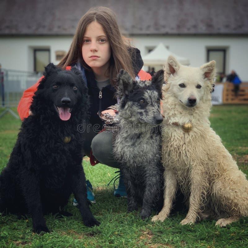 Ungarische Hunde und ihr Eigentümer lizenzfreies stockfoto