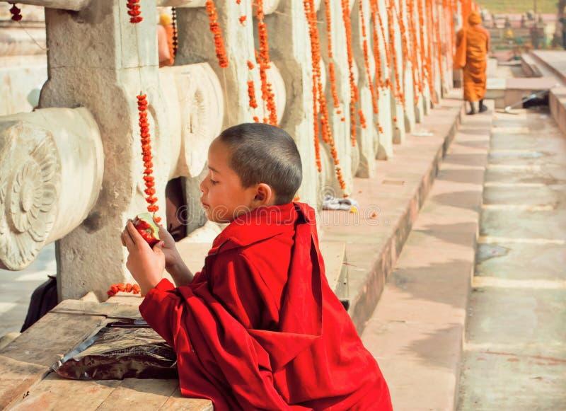 Unge i klänningen av den buddistiska skolan som äter äpplet förbi den Mahabodhi templet royaltyfri fotografi