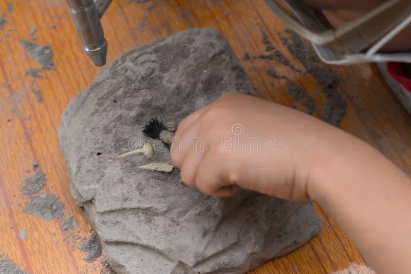 Unge som gräver Spinosaurus ben royaltyfri bild