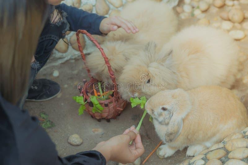 Unge som matar och daltar kaniner royaltyfri foto