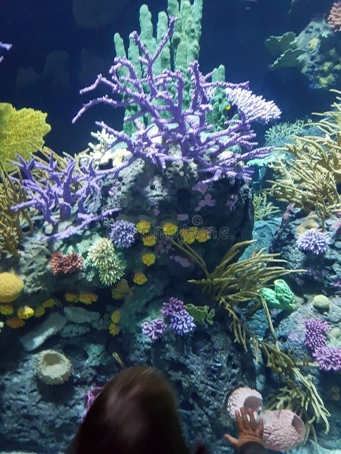 Ungeförälskelsekorall och fisk med färger royaltyfri fotografi