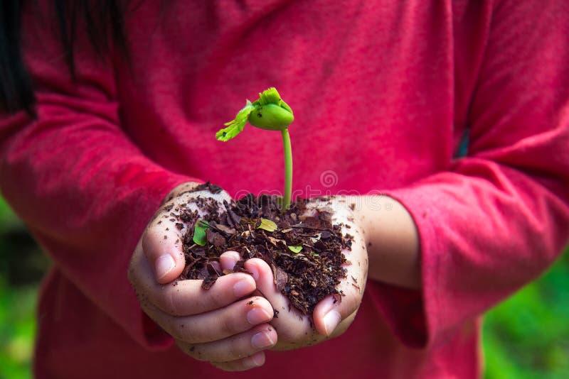 Ungen planterar kärnar ur med berömmande färg royaltyfri foto