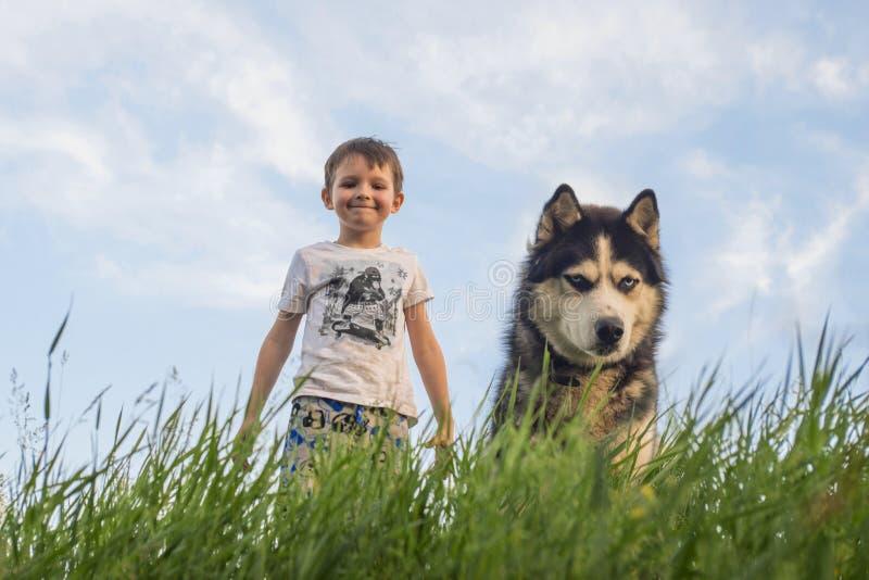 Ungen spelar med ett svartvitt skrovligt för hund med blåa ögon på grönt fält Barnlek med skrovligt utomhus- Aktivitet och aktiv  arkivbilder