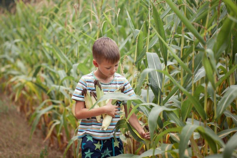 Ungepojkeinnehav och valhavre på lantgård i fält, utomhus royaltyfri bild