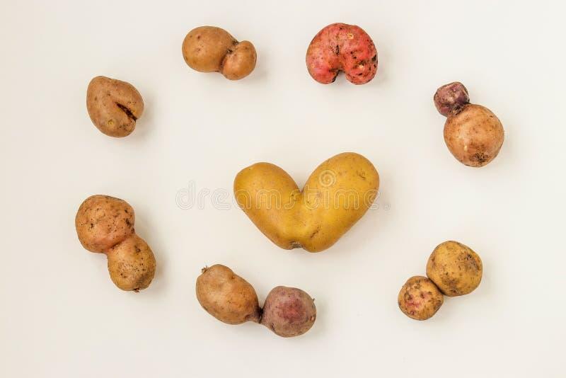 Ungewöhnlich ökologisches Gemüse - Kartoffeln auf weißem Hintergrund, Bio-Gemüse-Konzept, Top-Ansicht, Horizontale Ausrichtung lizenzfreies stockfoto