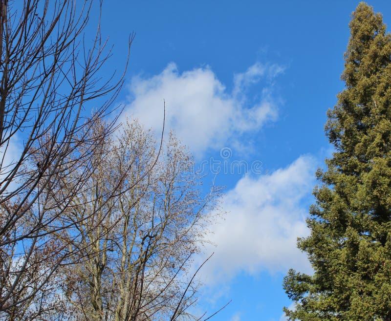Ungewöhnlich schöner Wintersonntag mit puffigen weißen Wolken stockfotografie