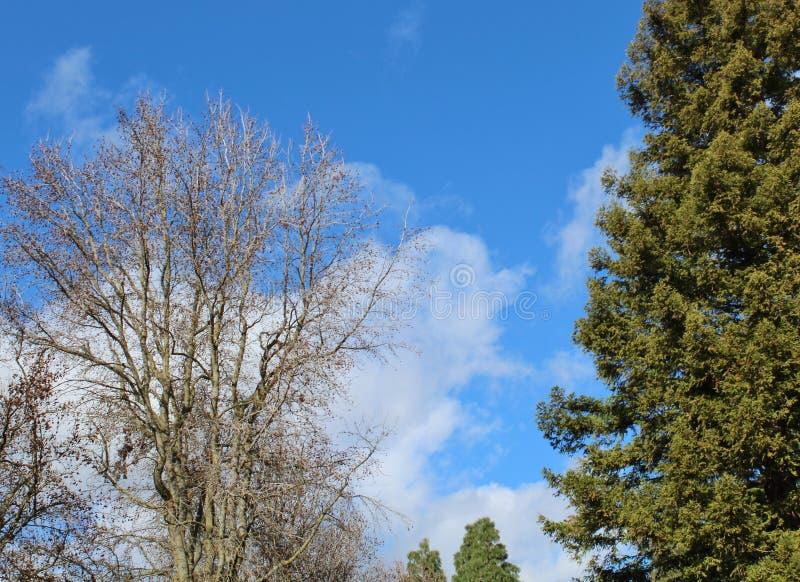 Ungewöhnlich schöner Wintersonntag mit puffigen weißen Wolken lizenzfreie stockfotos