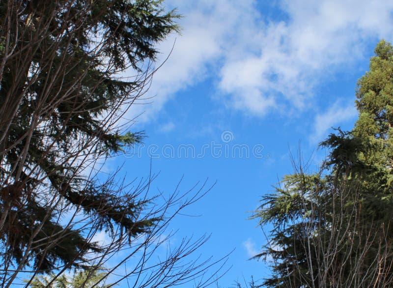 Ungewöhnlich schöner Wintersonntag mit puffigen weißen Wolken stockfoto