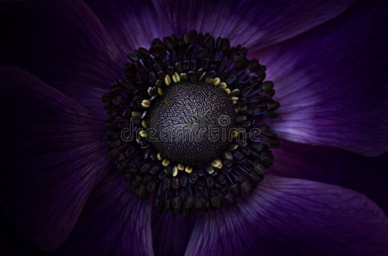 Ungewöhnliche blaue Blumen-Nahaufnahme lizenzfreie stockfotografie