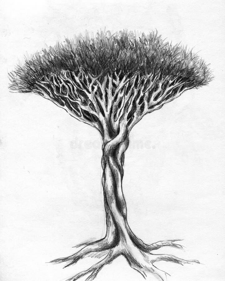 Ungewöhnlicher Baum - Bleistiftzeichnung lizenzfreie abbildung