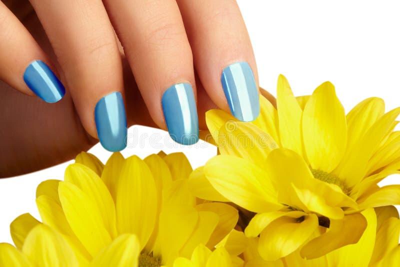 Unghie dipinte con smalto naturale Manicure con nailpolish blu Manicure di modo Lacca brillante del gel Sorgente fotografia stock libera da diritti