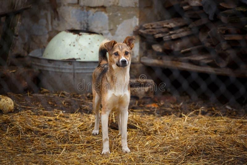 Unglücklicher obdachloser Hund lizenzfreie stockfotos