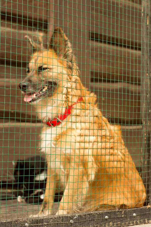 Unglücklicher obdachloser Hund rasterfeld lizenzfreies stockbild