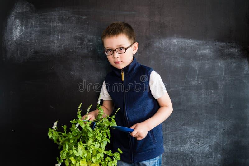 Ungt anseende för pojke` s med växten nära svart tavla Ung trädgårdsmästare Idérikt designbegrepp för kalender 2019 royaltyfri foto