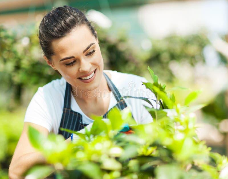 Ungt arbeta i trädgården för kvinna arkivfoton