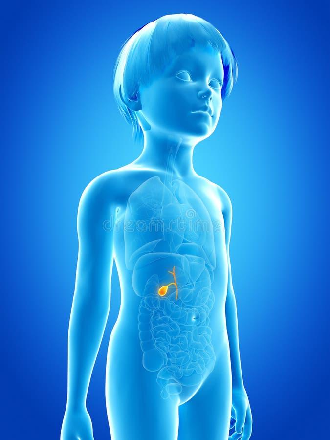 ungt barn - gallbladder stock illustrationer