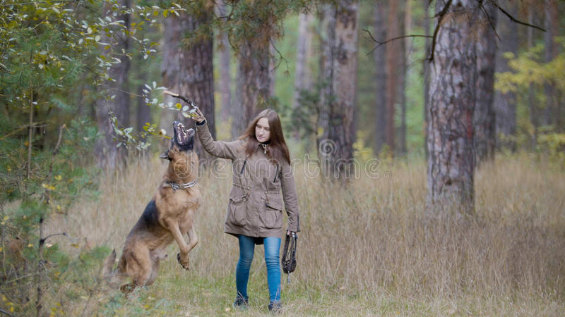 Ungt kvinnligt spela med hennes husdjur - tysk herde - som går på en höstskog royaltyfri foto